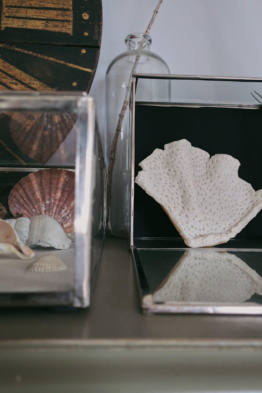 DIY fossile marin Shandor activité manuelle confinement pâte à sel